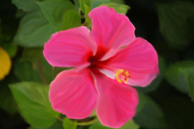 Цветки округлые, лососево - персиковые