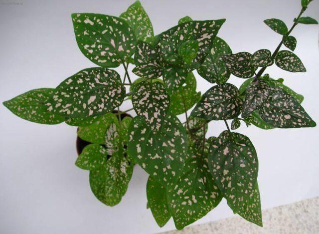 Темно-зеленые стебли