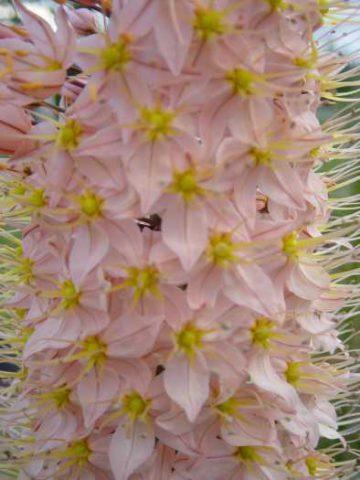 Разнообразные цветки