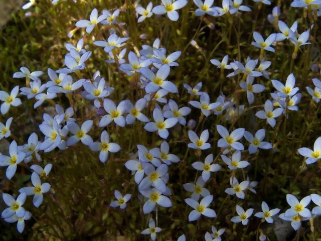 Звездчатые цветки