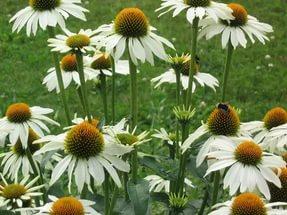 Краевые цветки теплых оттенков