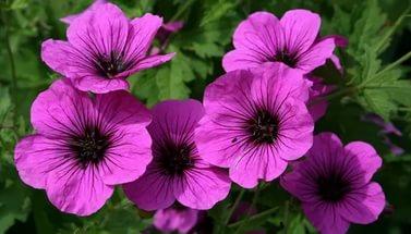 Цветки блестящие