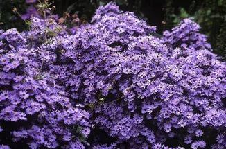 Корзинки фиолетово-синие