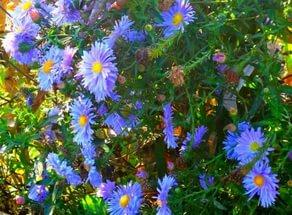 Корзинки лилово-голубые