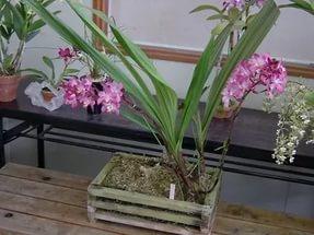 Карликовое растение
