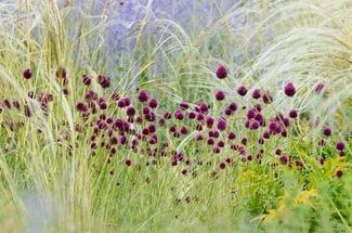 Розовые или красновато-пурпурные колокольчатые цветки