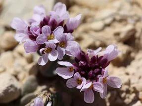 Изобильные цветки