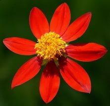 Обильно разветвленное растение