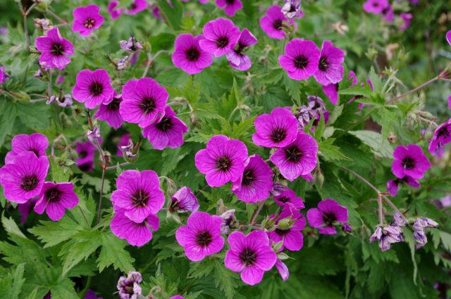 Цветки приятного пурпурного цвета