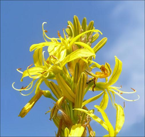 Цветки желтые