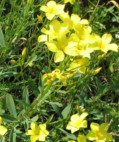 Яркие цветки