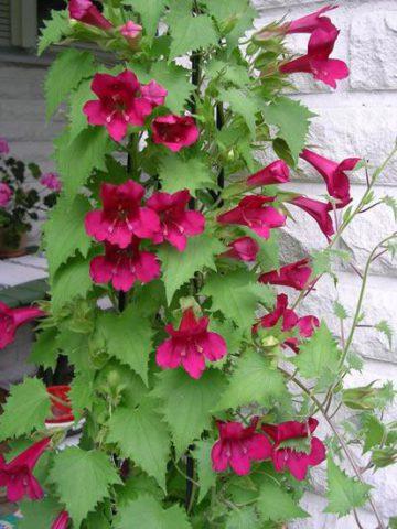 Типичные розовые цветки