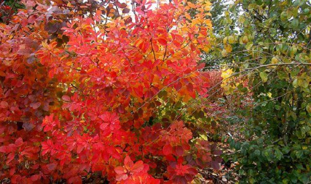 Округлые листья
