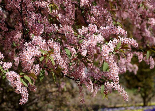 Цветки с ароматом