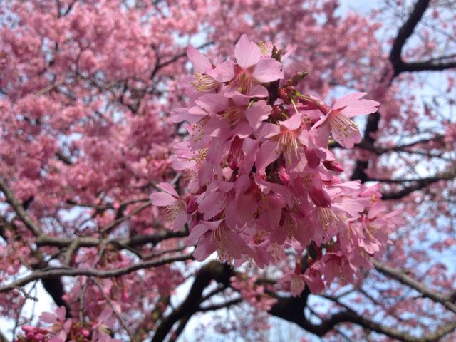 Карминовые цветки