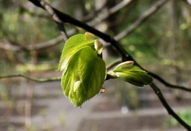 Изящное гибридное дерево
