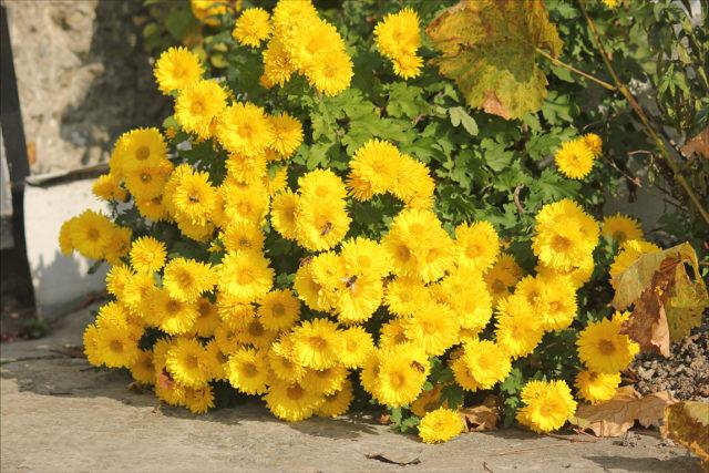 """""""Yellow Heide"""""""