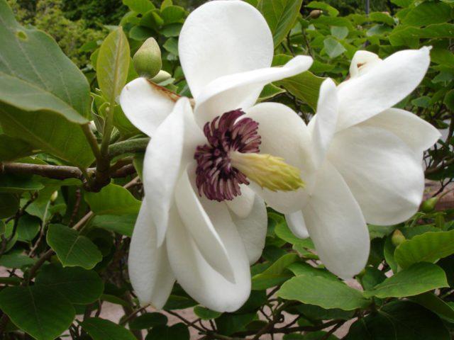 Свисающие вниз цветки