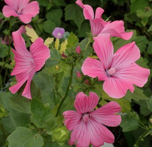 Цветки различных оттенков розового