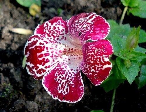 Цветки насыщенного розового цвета