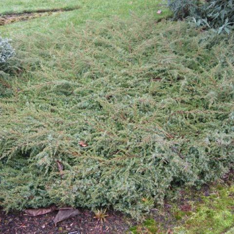 Пористые ковры из рыхло располагающихся ветвей