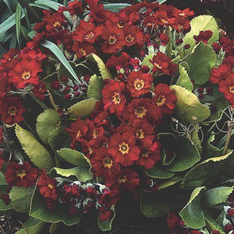 Кирпично-красные цветки