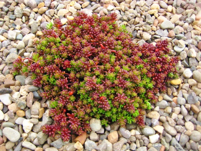 """Coral Carpet"""