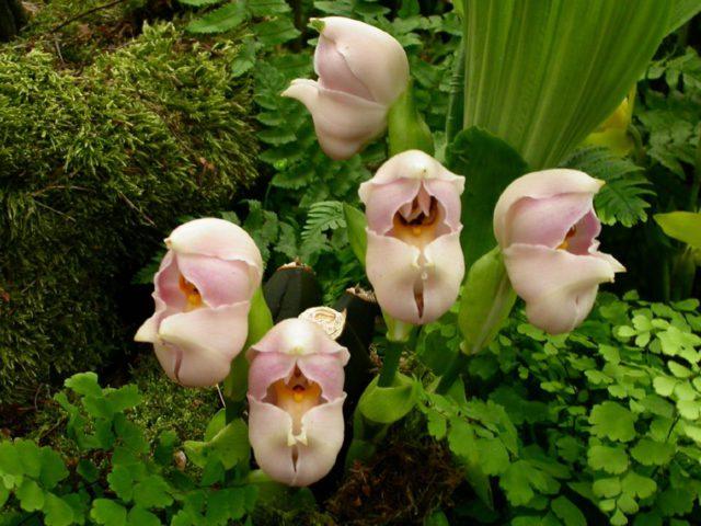 Эффектные цветки