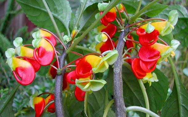 Крупные цветки