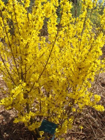 Множество мелких темно-желтых цветков