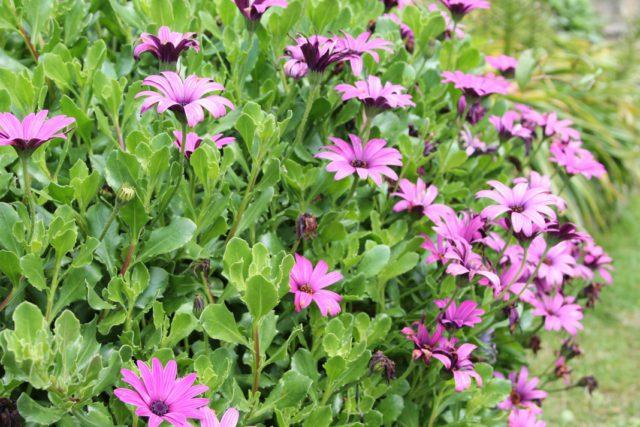 Двугубые цветки