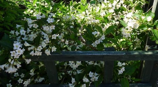 Белые цветки