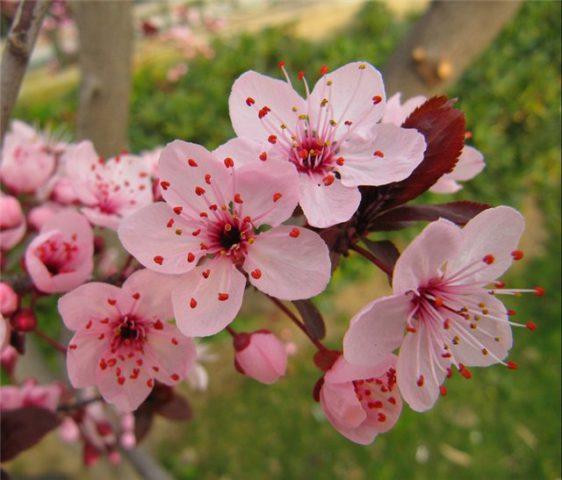 Масса мелких цветков