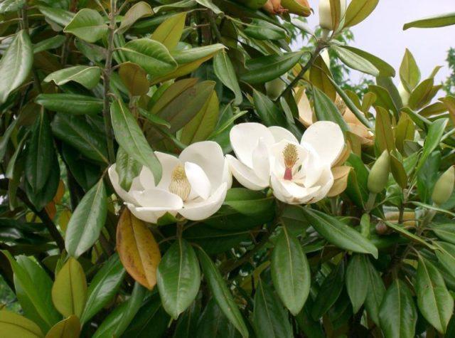 Цветки с интенсивным ароматом