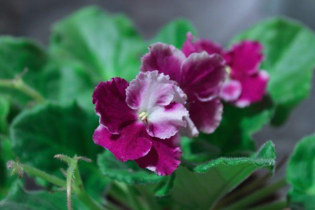 Одноцветные или разноцветные цветки