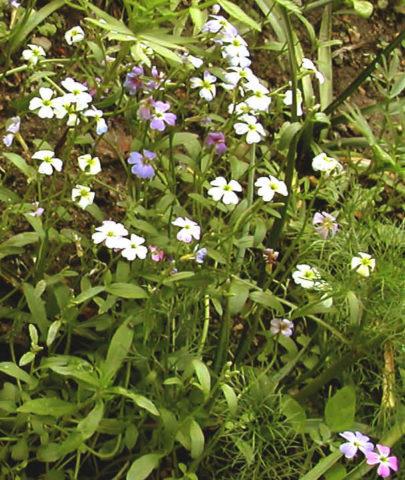 Цветки с нежным ароматом