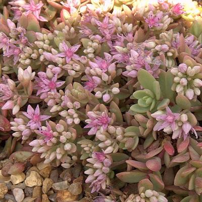 Малиновые цветки и зеленые листья