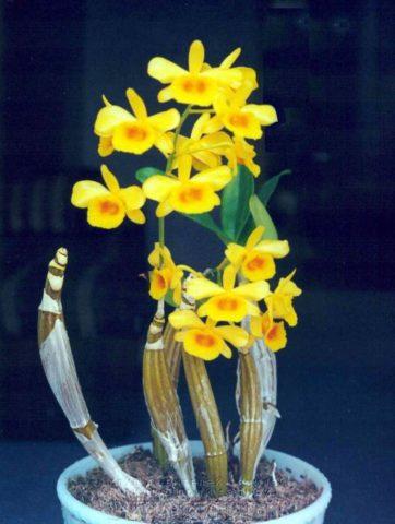 Желтые ароматные цветки