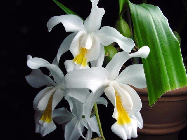 Великолепные белые ароматные цветки