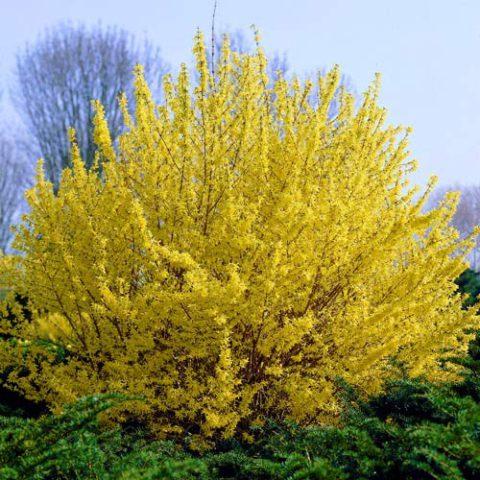 Растение с зубчатыми листьями бутылочно-зеленого цвета