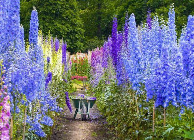 Цветки пастельно-сиреневые