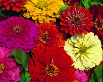 Полумахровые соцветия