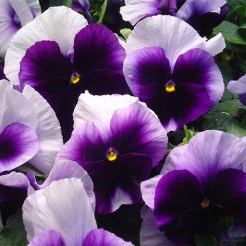 Яркие цветки разнообразной окраски