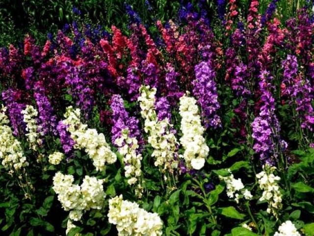 Простые цветки в колосовидных соцветиях