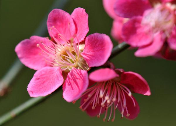 Цветки махровые, чашевидные