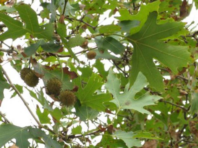 Дерево с извилистыми ветвями