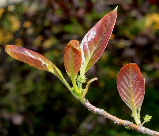 Листья осенью окрашиваются во все оттенки красного цвета
