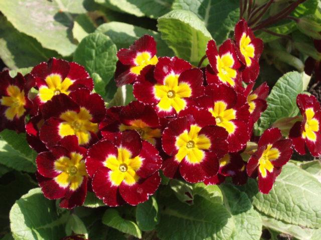Душистые цветки