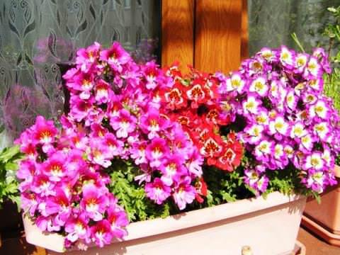 Цветки отличаются огромным разнообразием окраски