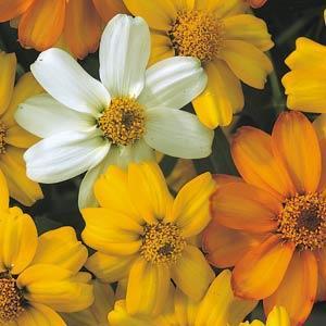 Цветки золотистого цвета